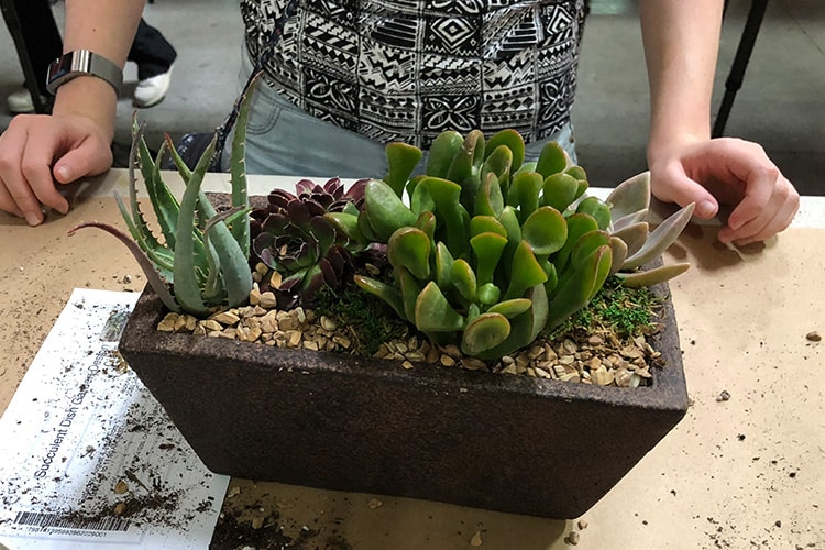 Succulent Dish Garden Design Class 488481488 Az Flower Market Arizona Adorable Dish Gardens Designs