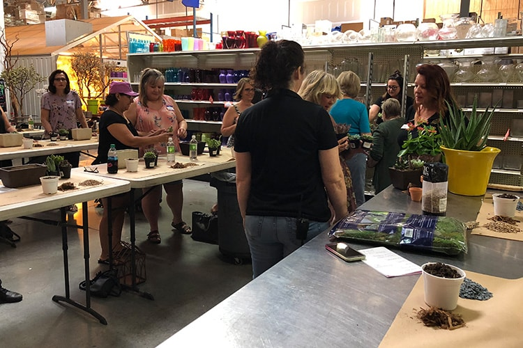 Succulent Dish Garden Design Class Az Flower Market Arizona